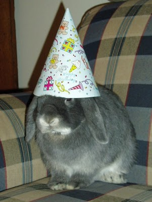 Birthdays Birthday-bunny